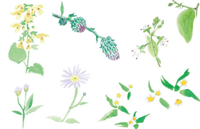 石見銀山の草花ブログ